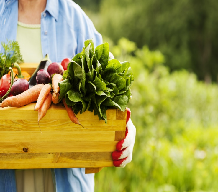 organic food_pic 4