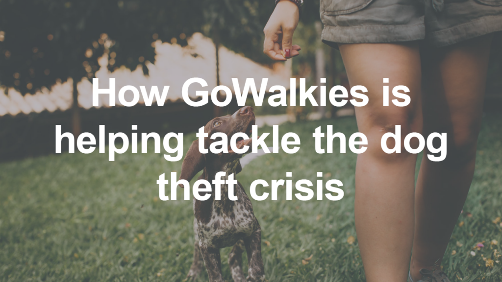 GoWalkies Helping to Tackle the Dog Theft Crisis