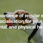 Tips to Maintain Dog's Mental & Physical Health by GoWalkies