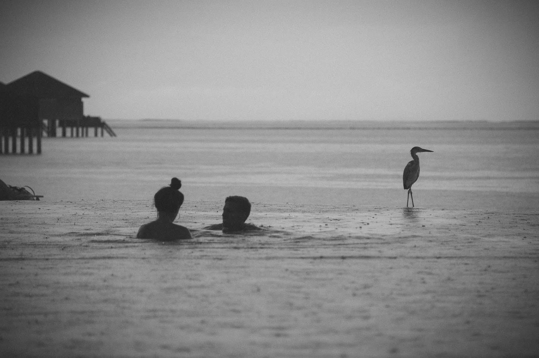 Birds of Maldives