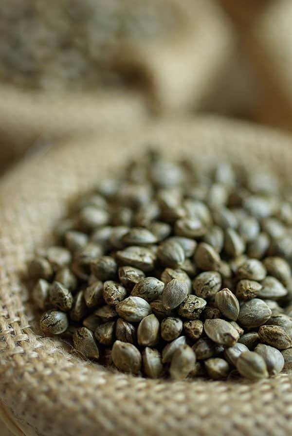 semillas grow shop
