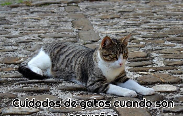 un-gato-adulto-tumbado-en-la-calle