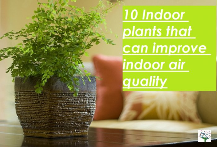 Indoor plants to improve indoor air quality