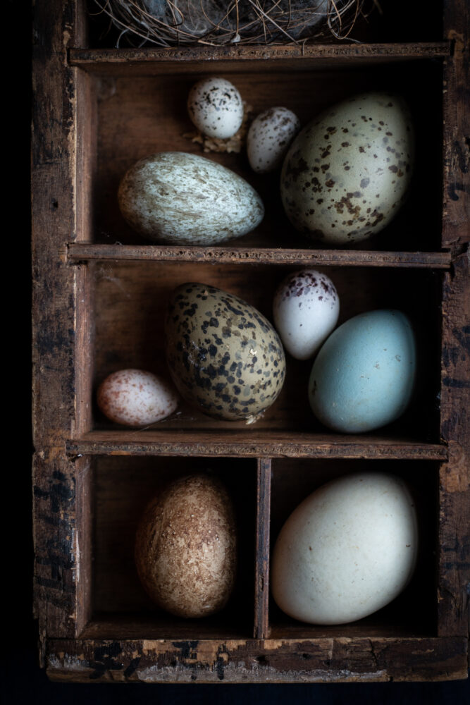 bird eggd