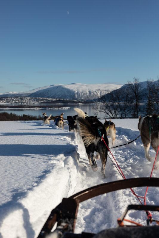norway dog sled