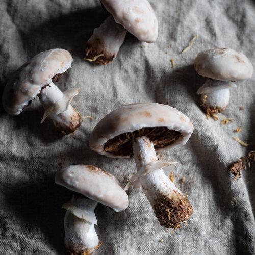 mushroom shaped gingerbread