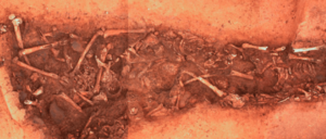 Mass Grave Reveals Organised Violence Among Europe's First Farmers