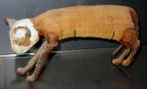 Example of a mummified cat from ancient Egypt.