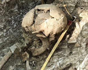 Skull excavated at Barrow Clump in Salisbury Plain.
