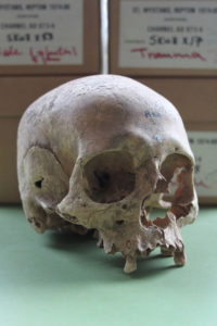 A female skull from the Repton burial