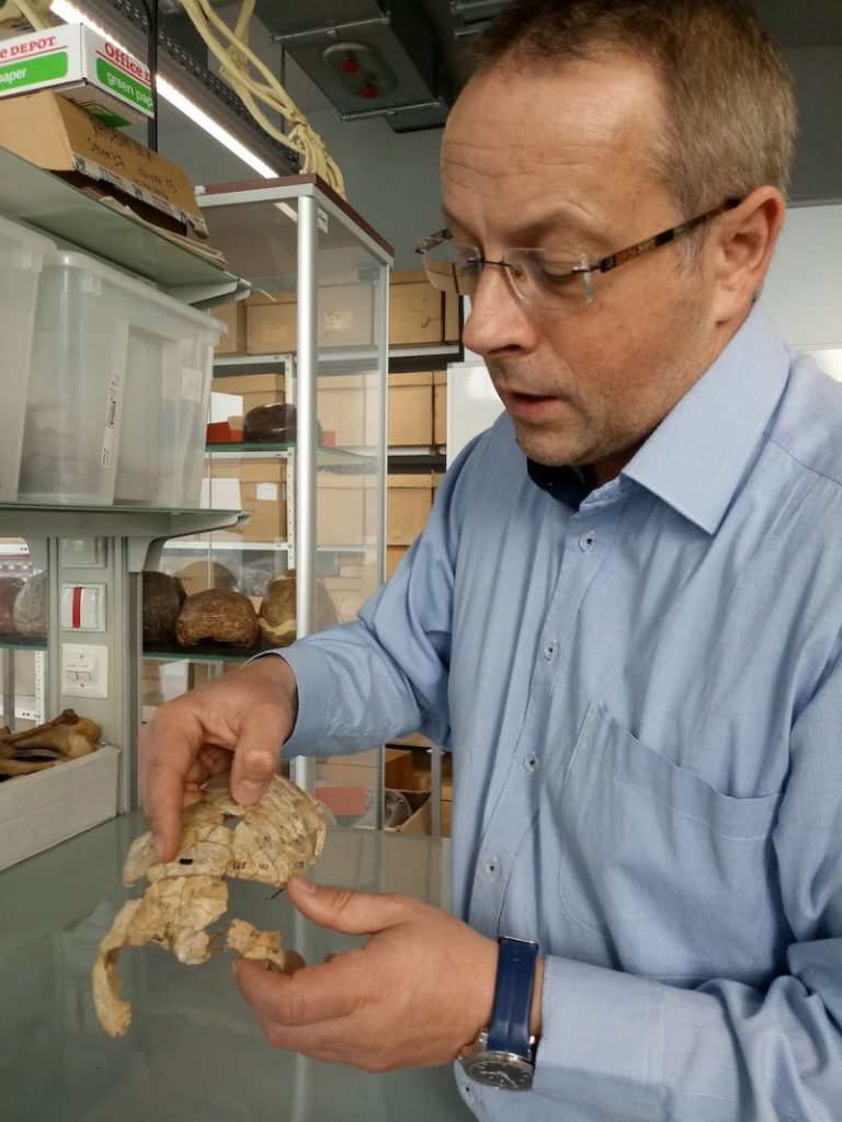 Jacek Tomczyk, a physical anthropologist, examines the 8,000-year-old skull found in Wieliszew, in east-central Poland.