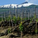 A vineyard near Mt Etna, Sicily. Winemaking may have begun on the island more than 6,000 years ago