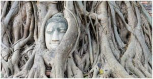 Buddhas face in roots of trees Wat Mahathat Ayutthaya Thailand