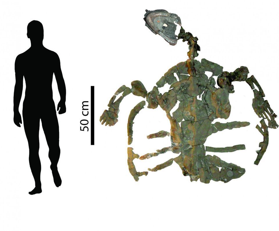 Oldest Known Sea Turtle Fossil Discovered In South America