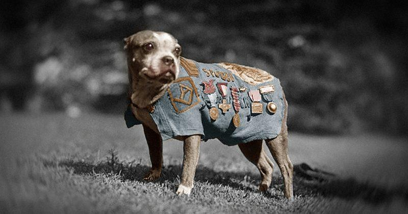 Meet Sergeant Stubby: The first dog in American history to be awarded military rank