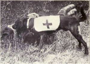 Ambulance dog during WWI