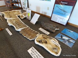 Fossils from a plesiosaur were found near Santee, about an hour from the park.