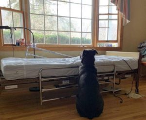 Moose waiting for the return of his owner, who died of cancer.