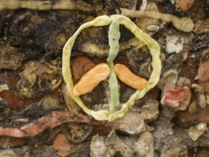 Peace sign out of gum.