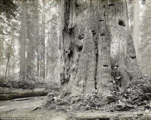 That old-growth redwood forest