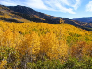 Pando, the world's oldest clonal organism.