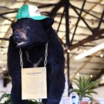 'Pablo EskoBear': The story of the legendary cocaine bear of Kentucky