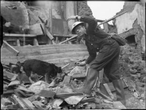 Air Raid Precautions Dog at work in Poplar, London, England, 1941.