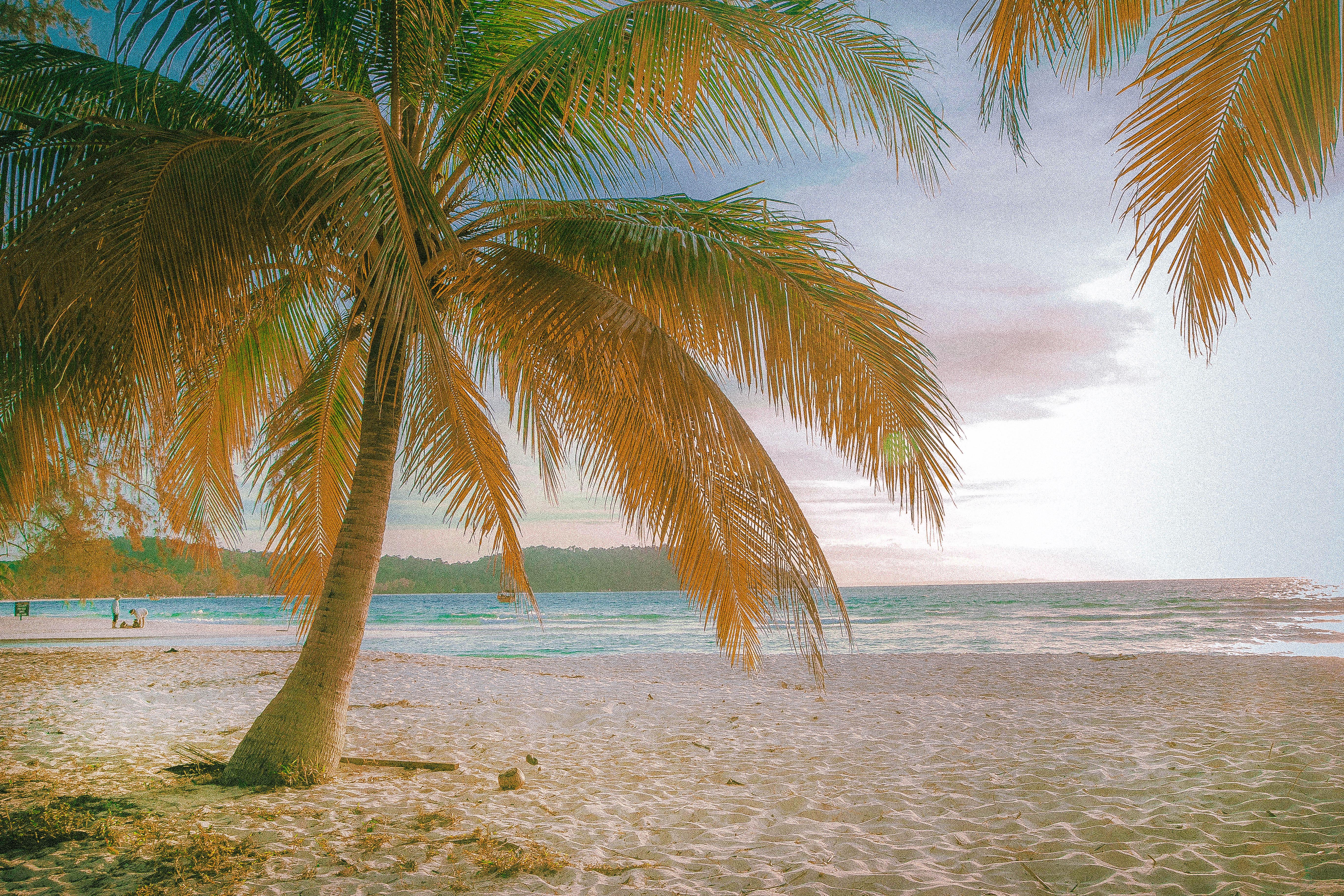 cambodia koh rong island palm sunshine sand beach relaxing day sunrise