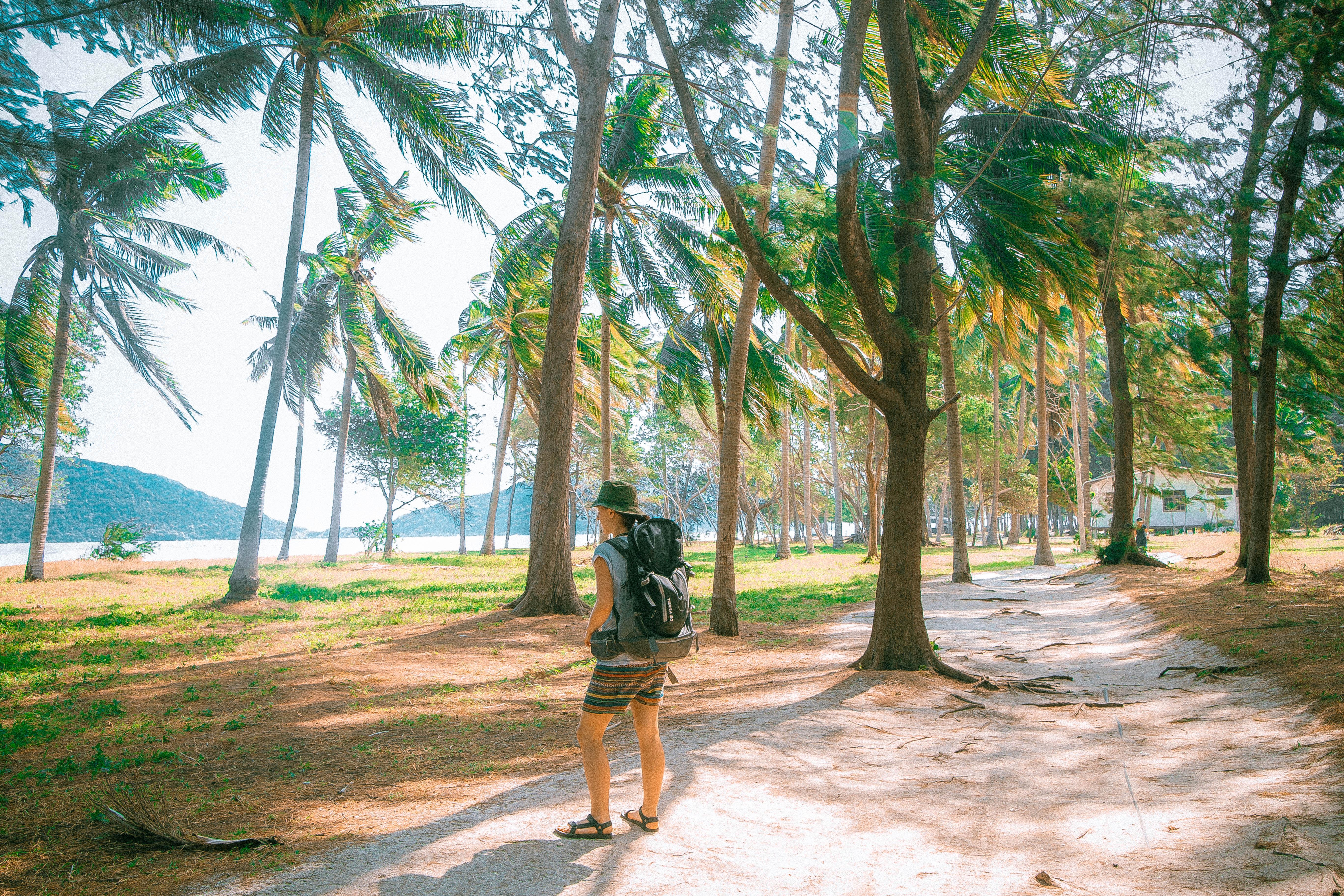 beach palm trees picnic beach zone hua hin thailand