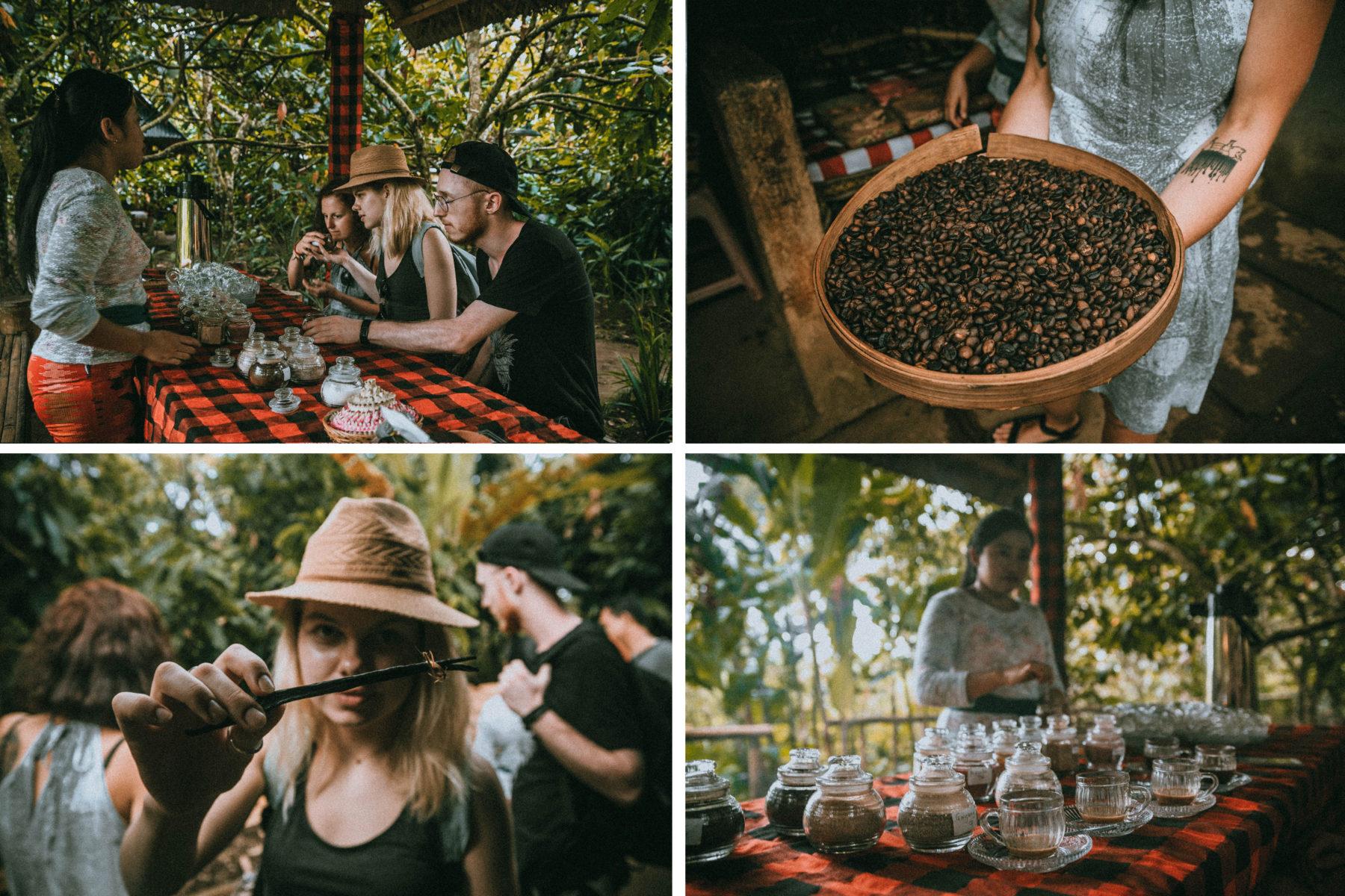 bali indonesia luwak coffee tasting authentic experience