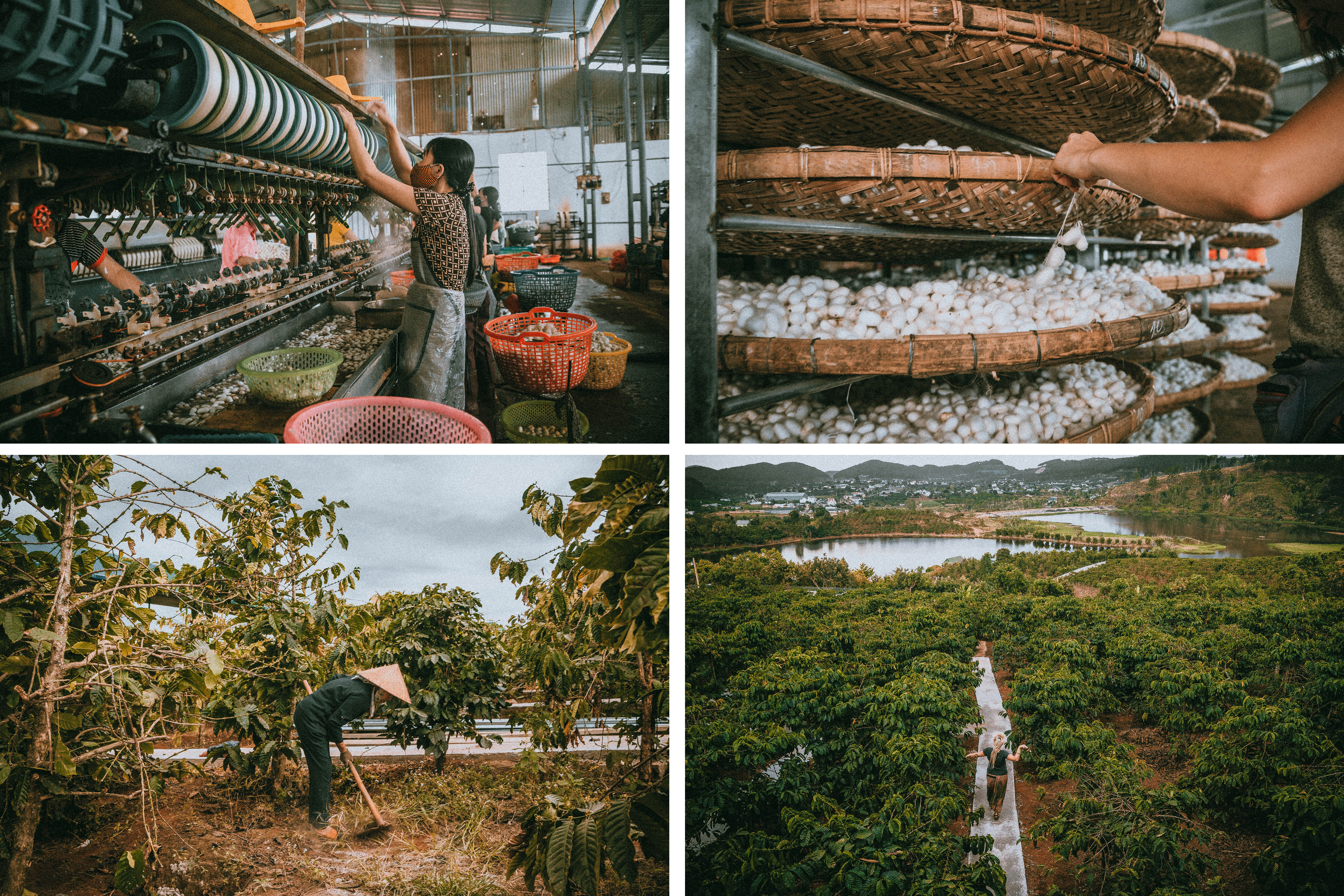 vietnam south east asia coffee plantation silk factory local people working green local culture exploring dalat
