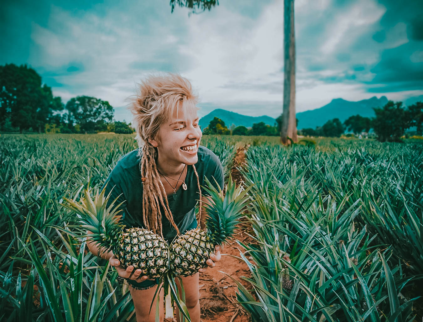 pineapple plantation farm local culture thailand south east asia
