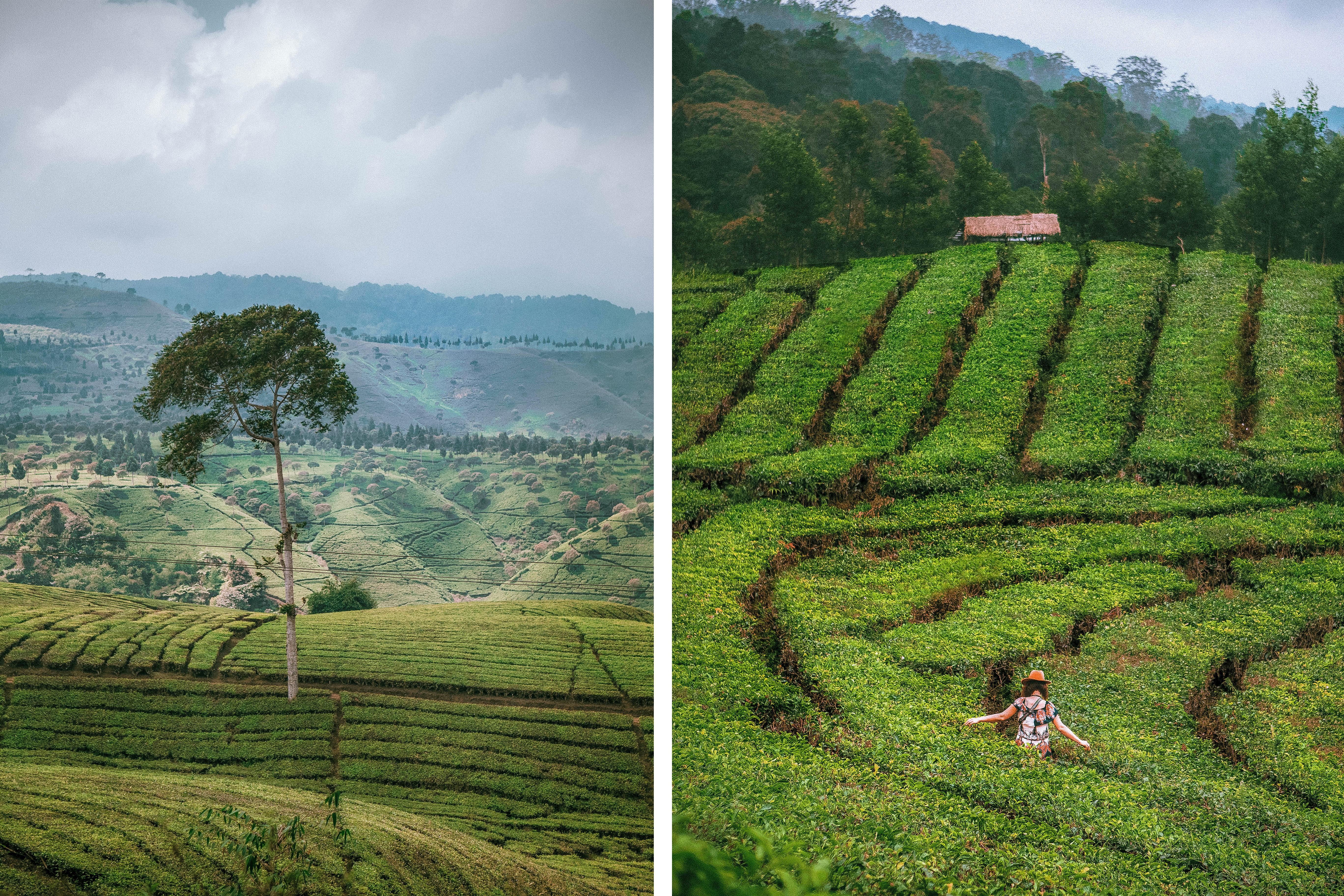 driving around west java indonesia tea plantations nature beautiful green