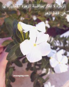 الزهرة لا تفكر بمنافسة الزهرة المجاورة لها هي فقط تزهر
