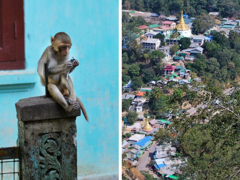 mount popa monkey