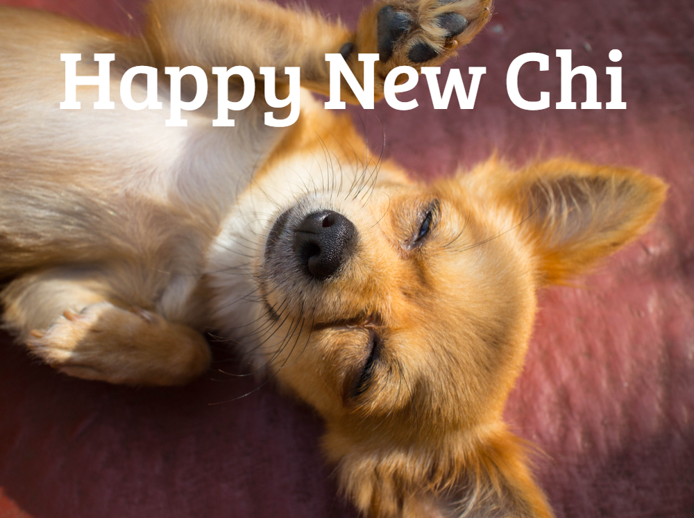 Make 2019 the Best Year for Chihuahua Health