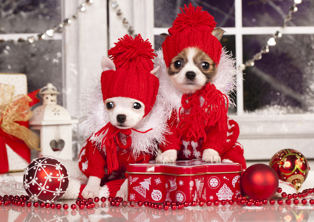 Christmas food that's poisonous to dogs