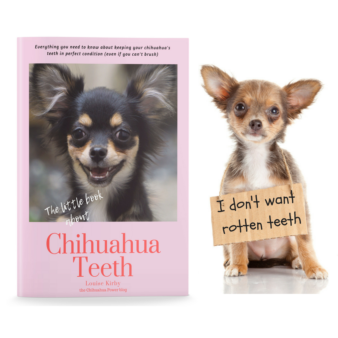 The little book of chihuahua teeth by Louise Kirby