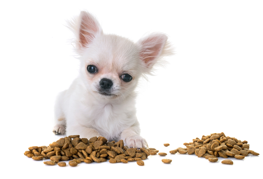 How to store dry dog food and why you should care.