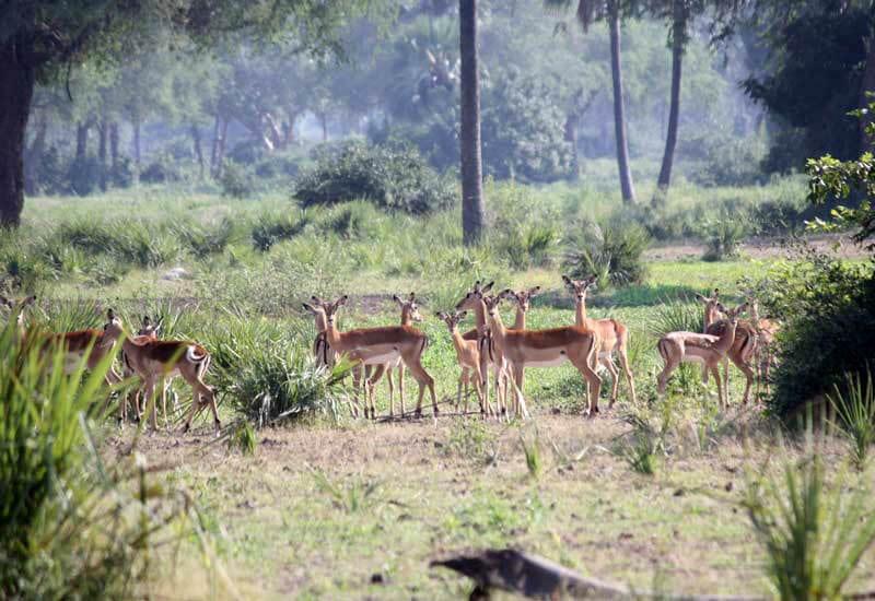 Ashtanga_Yoga_Dubai-Zambia_Deer