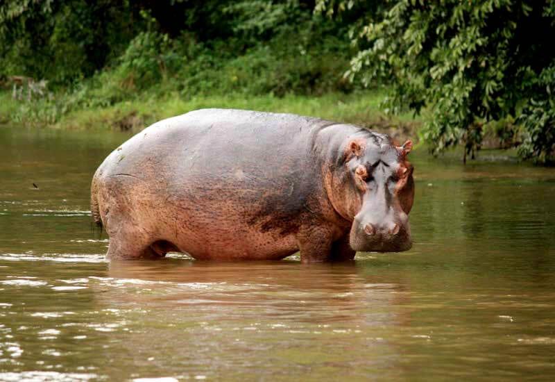 Ashtanga_Yoga_Dubai-Zambia_hippo