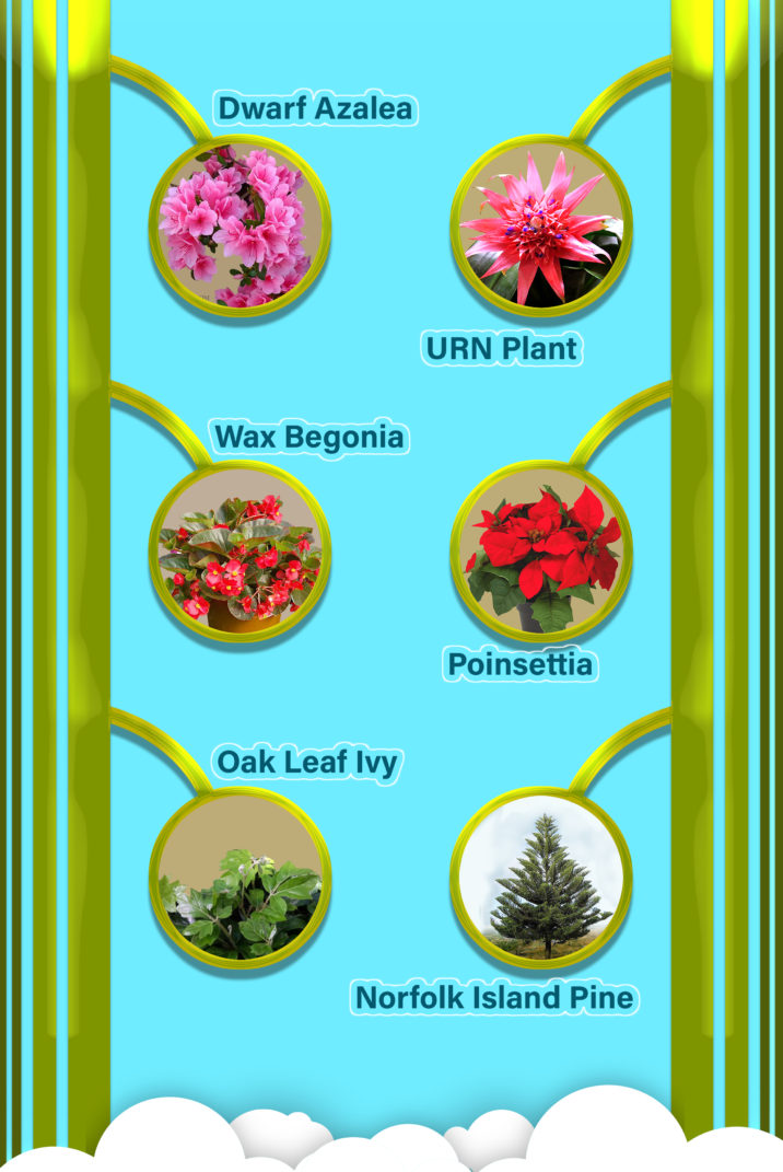 6  INDOOR AIR PURIFYING PLANTS APPROVED BY NASA 1