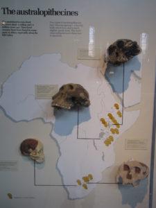 Australopihecines