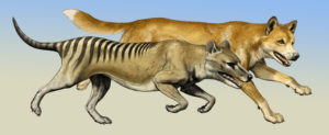 Tasmanian Tiger and Wolf