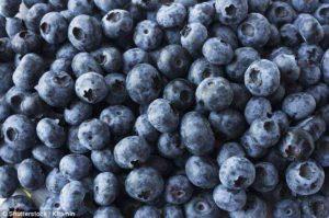 BlueBerry Bloom
