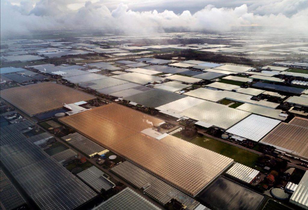 Netherland Farms