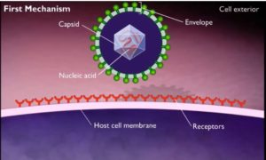 Cell_receptors