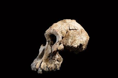 MRD Skull