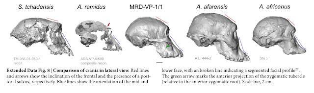 Skull Comparison