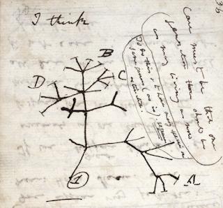 Evoution Tree by Darwin